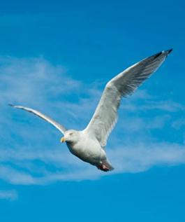 flygandemas2